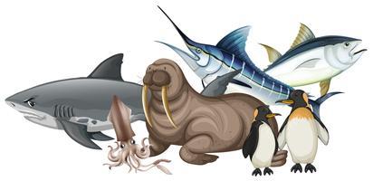 Diferentes tipos de animales marinos en blanco.