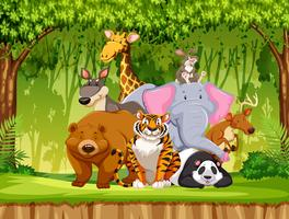 Set of wildlife animals