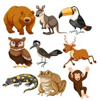 Set of different animals