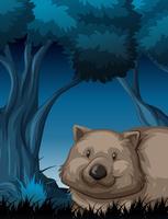 A wombat in dark forest