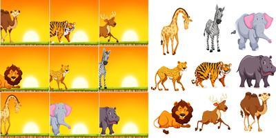 Animale selvatico nella scena del tramonto