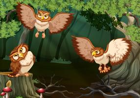 Three owls flying in forest