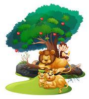 León familia y mono en el bosque