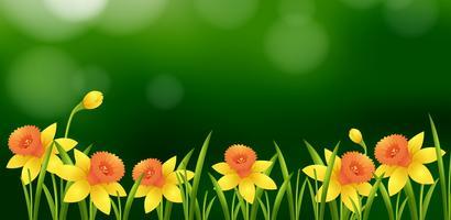 Bakgrundsdesign med gula blommor i trädgården