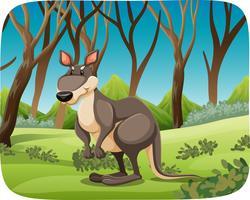 Um canguru no fundo da natureza