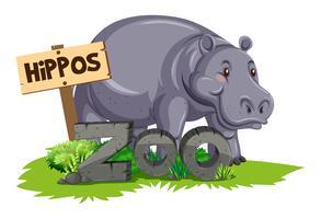 Hipopótamo selvagem no zoológico
