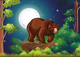 Gros ours brun dans la nuit de pleine lune
