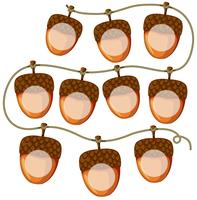 set of acorns on string vector
