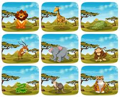 Set of different animals in scenes