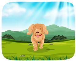 cachorro corriendo en el parque