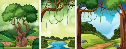 Conjunto de paisaje de la naturaleza