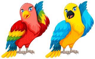 Deux oiseaux perroquets avec une plume colorée