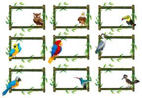Set of birds in nature scenes