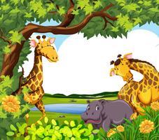 Jirafas y hipopótamos junto al estanque.