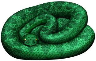 Green rattlesnake on white background