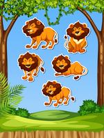 Leão na etiqueta da natureza