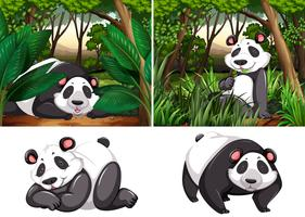 Panda in the deep forest