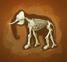 Fossil van een wollige mammoet