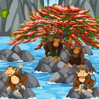 Four monkeys at the waterfall scene