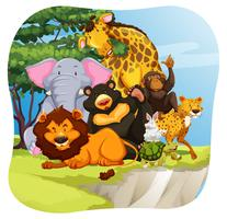 dieren in het wild
