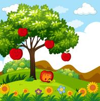 Red apple tree in the park
