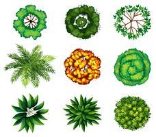 Un grupo de plantas