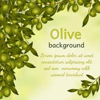 Olivolja bakgrund