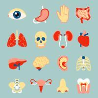 Mänskliga organ sett