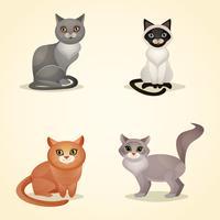 Gato conjunto aislado