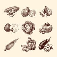 Conjunto de croquis de verduras