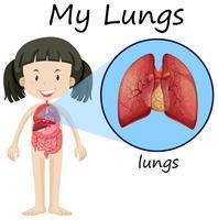 Menina, e, pulmões, ligado, diagrama