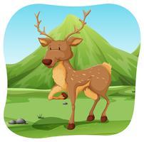 Um cervo