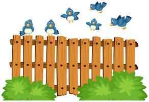 Blå fåglar som flyger över trästaket