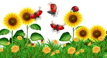 Lieveheersbeestjes die in zonnebloemtuin vliegen