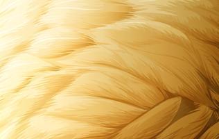 Uma textura de penas