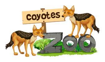 Coyotes op het dierentuinenteken