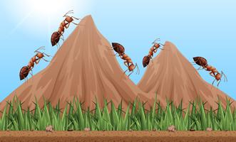 Many ants climbing up the mountains