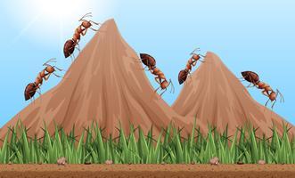 Muitas formigas subindo as montanhas