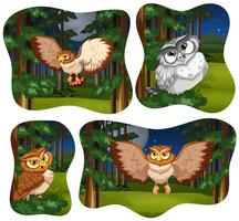 Four forest scenes with owl flying