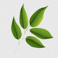 Green leaves on transparent background
