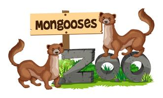 Mongooses standing on zoo sign