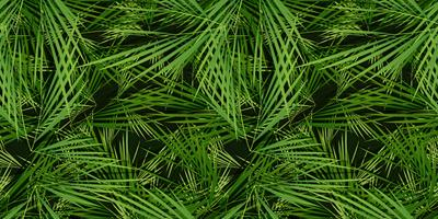 Seamless Palm Trees Leaves Background vector