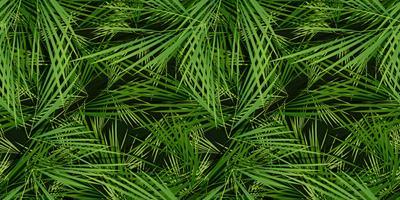Naadloze palm bomen laat achtergrond