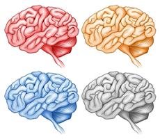 Human brain in four colors vector