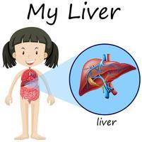 Diagrama de anatomia humana com menina e fígado