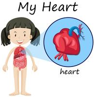 Menina e coração no diagrama