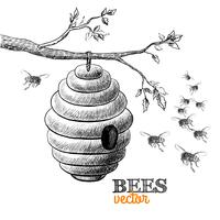 Honey bees and hive on tree branch vector