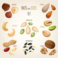Set de mezcla de nueces vector