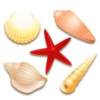 Conjunto de conchas y estrellas de mar rojas.
