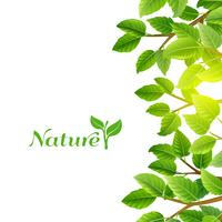 Green leaves nature background print